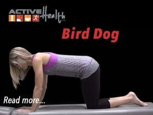 bird-dog-exercise