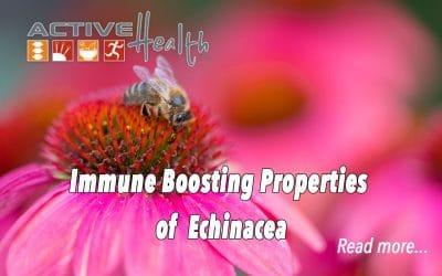 Echinacea to Boost Immunity