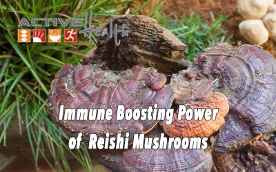 Reishi Mushrooms to Boost Immunity