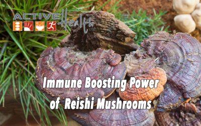 Reishi Mushrooms to Boost Immunity