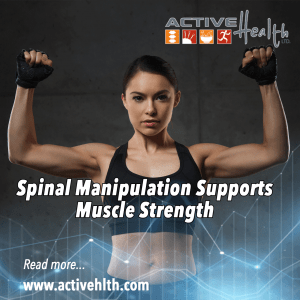 Spinal Manipulation supports Muscle Strength